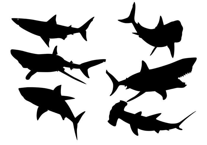 700x490 Hammerhead Sharks Vector Silhouettes