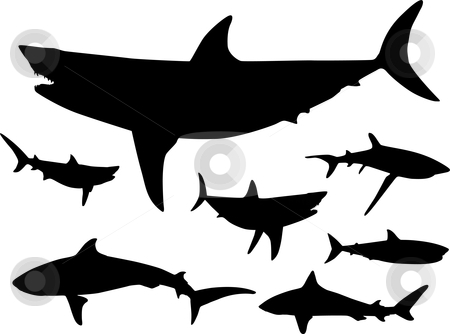 450x334 Hammerhead Clipart Shark Fin