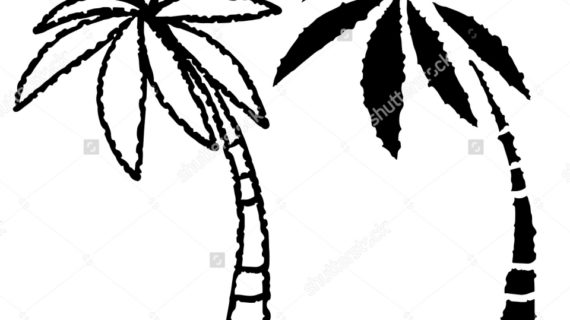 570x320 Palm Trees Drawing Hammock And Palm Trees Vector Drawing 95535595