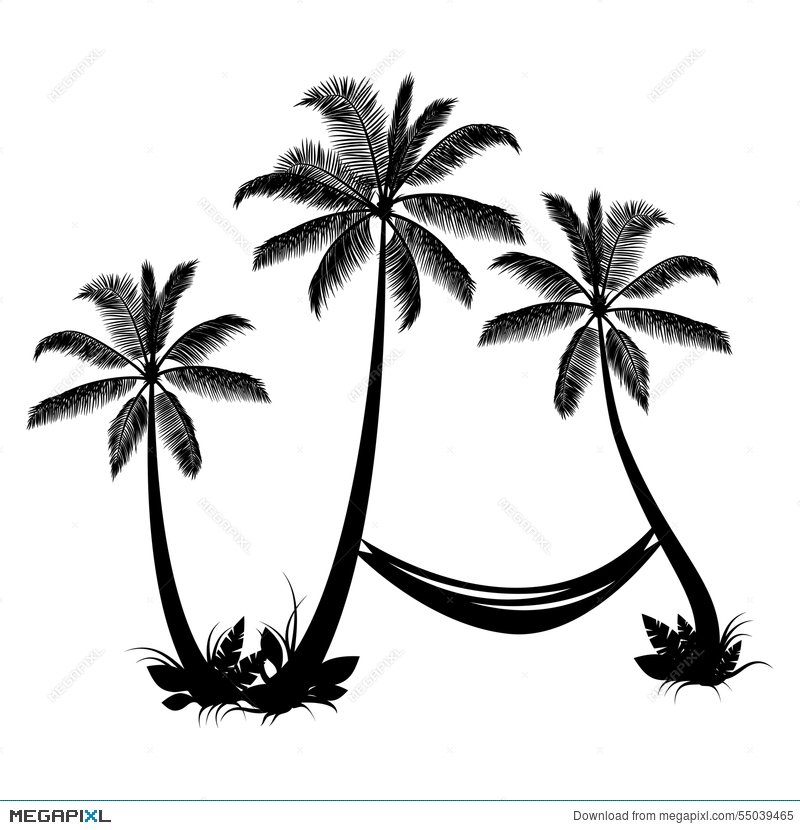 800x830 Palm Trees With Hammock Illustration 55039465