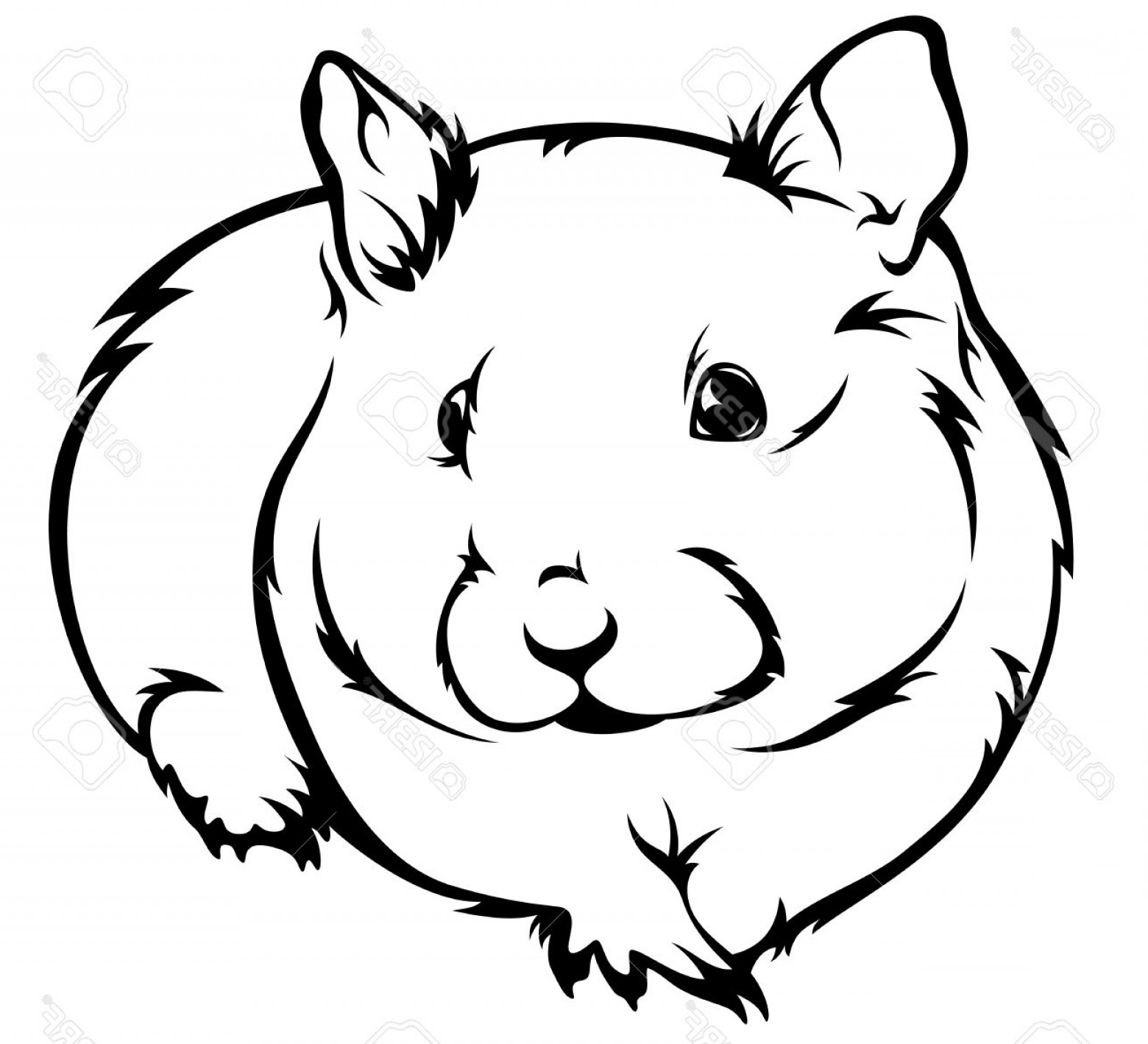 1560x1418 Photocute Hamster Cricetus Vector Illustration Black And White