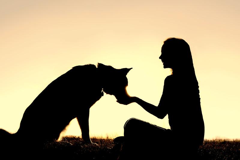 800x533 Doggee Harmony Dog Puppy Private Trainer Amp Classes Santa Barbara Ca