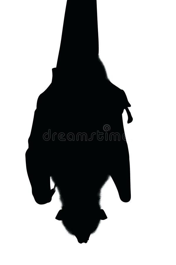600x900 Hanging Bat Silhouette Download Silhouette Bat Hanging Stock