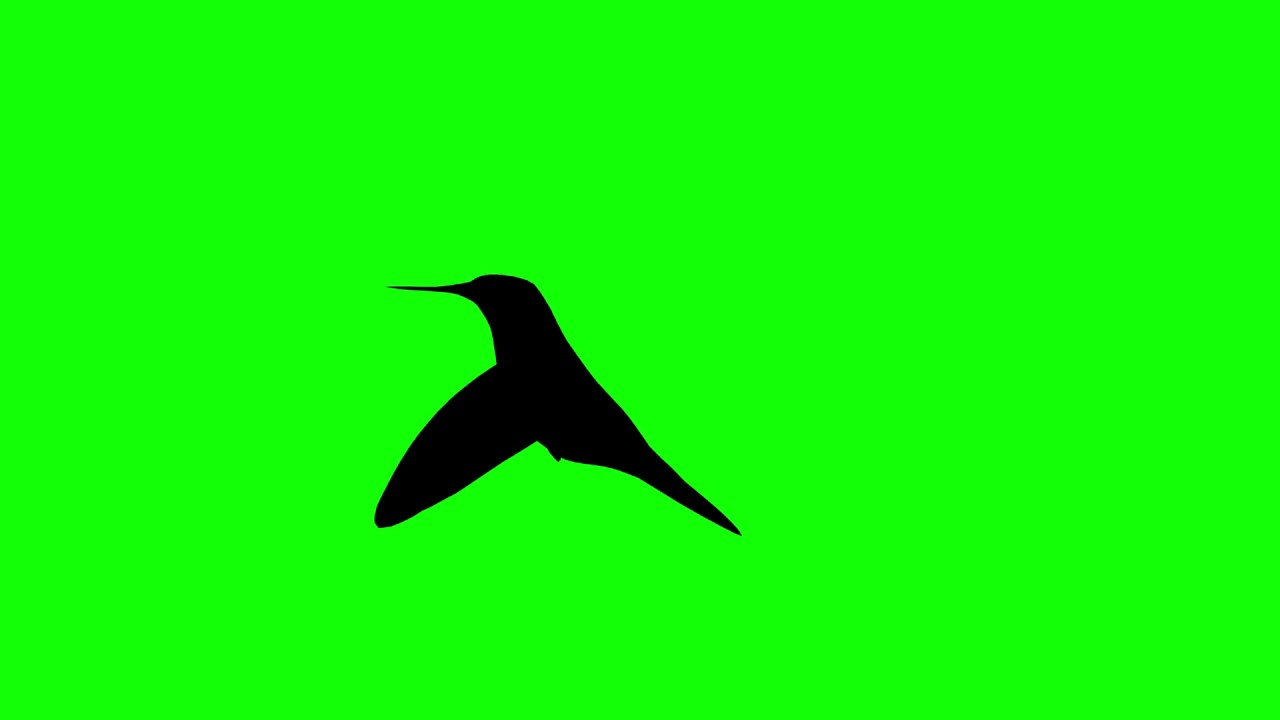 1280x720 Free Hd Video Backgrounds Animal Silhouette Bird Hummingbird
