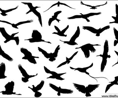 240x200 Image Of Black Flying Bird Silhouette Tattoo Clipart