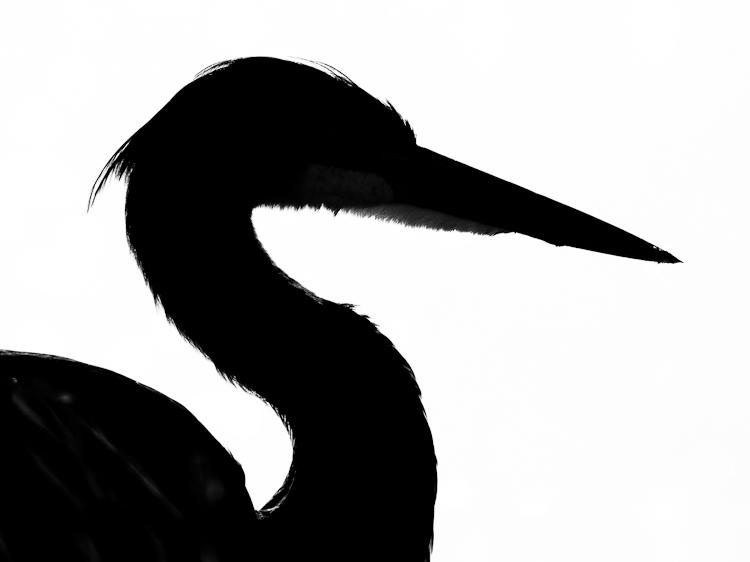 750x562 Heron Head Clipart