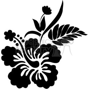 300x300 Royalty Free Black And White Hawaiian Hibiscus Flower 380150