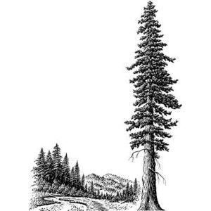 300x300 Redwood Tree Clip Art Free
