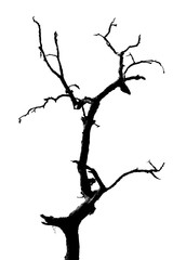 160x240 Search Photos Oak Tree Silhouette
