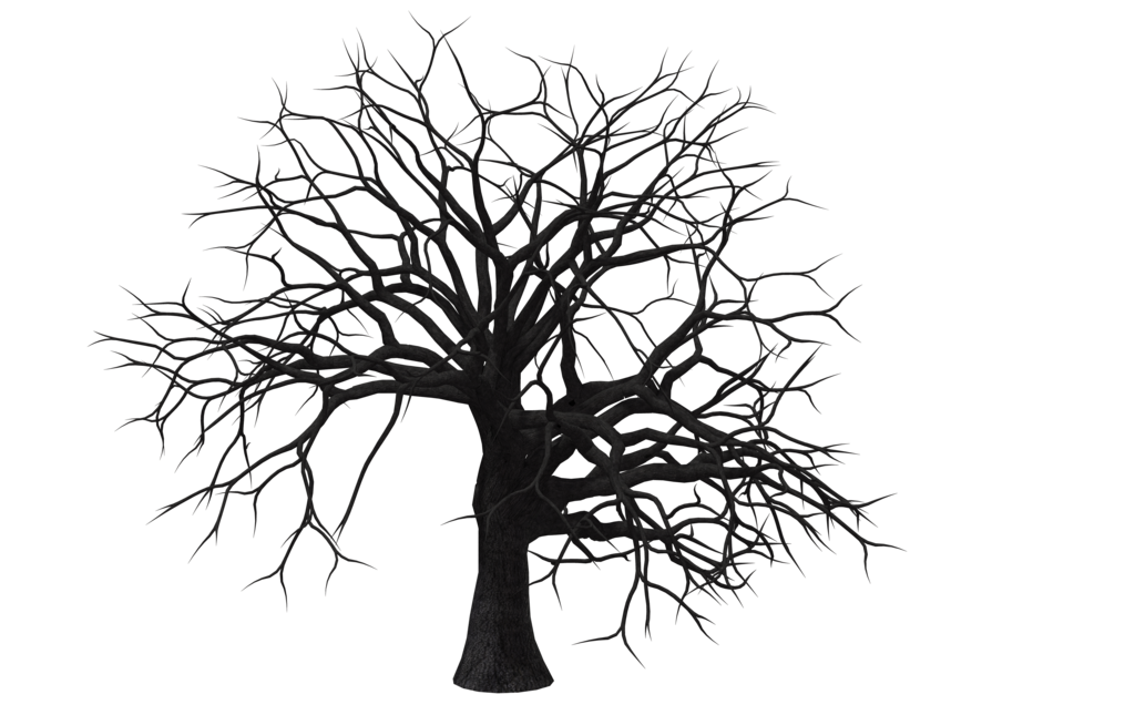 1024x645 Tree 05 By Free Stock By Wayne