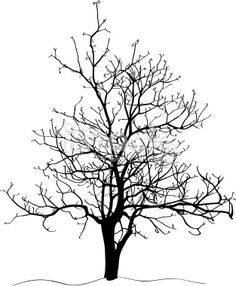 236x286 Elm Tree Silhouette Beauty Book Tree Silhouette