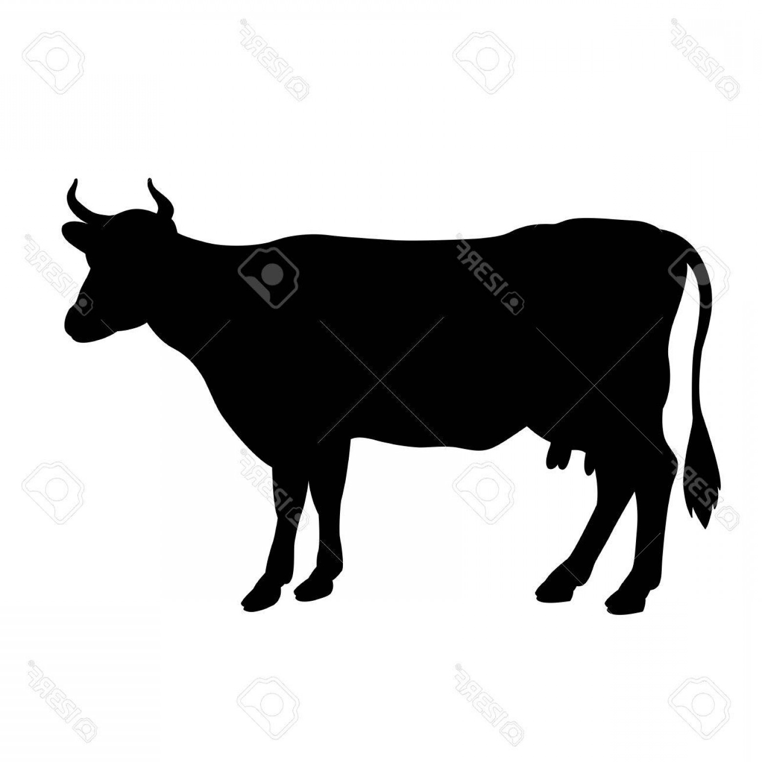 1560x1560 Artistic Photostock Vector Black Cow Silhouette Isolated