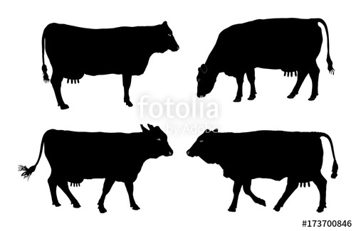 500x325 Group Of Cow Vector Silhouette Illustration. Stock Image