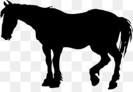 260x180 Foal Mare Colt American Quarter Horse Arabian horse