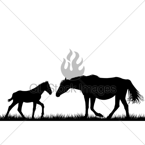 500x500 Silhouettes Of Mare And Her Foal Gl Stock Images