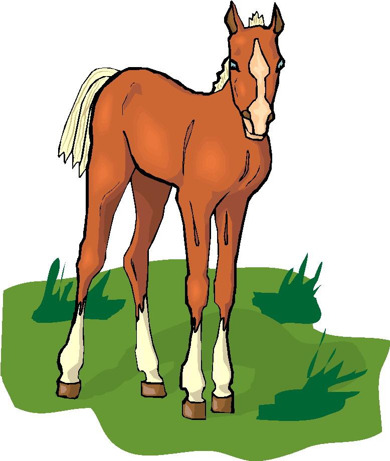 778x921 Foal Clipart Head
