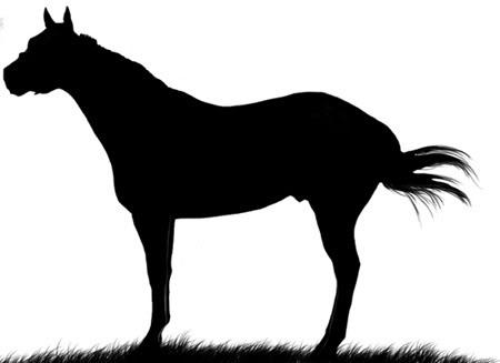 450x327 Quarter Horse Silhouette