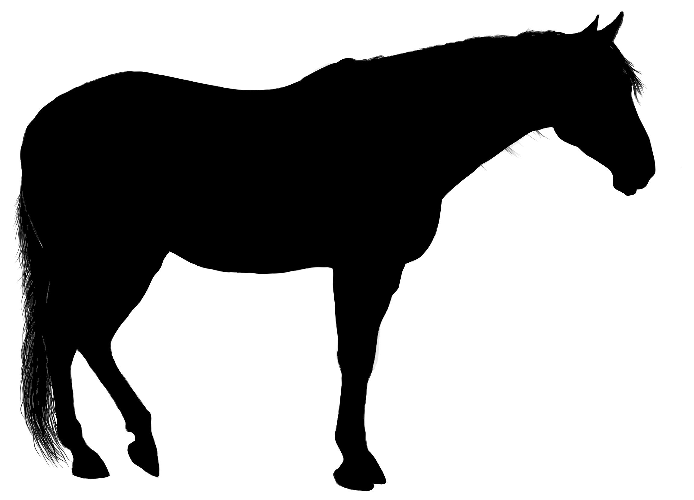 2304x1660 Standing Horse Silhouette Clipart