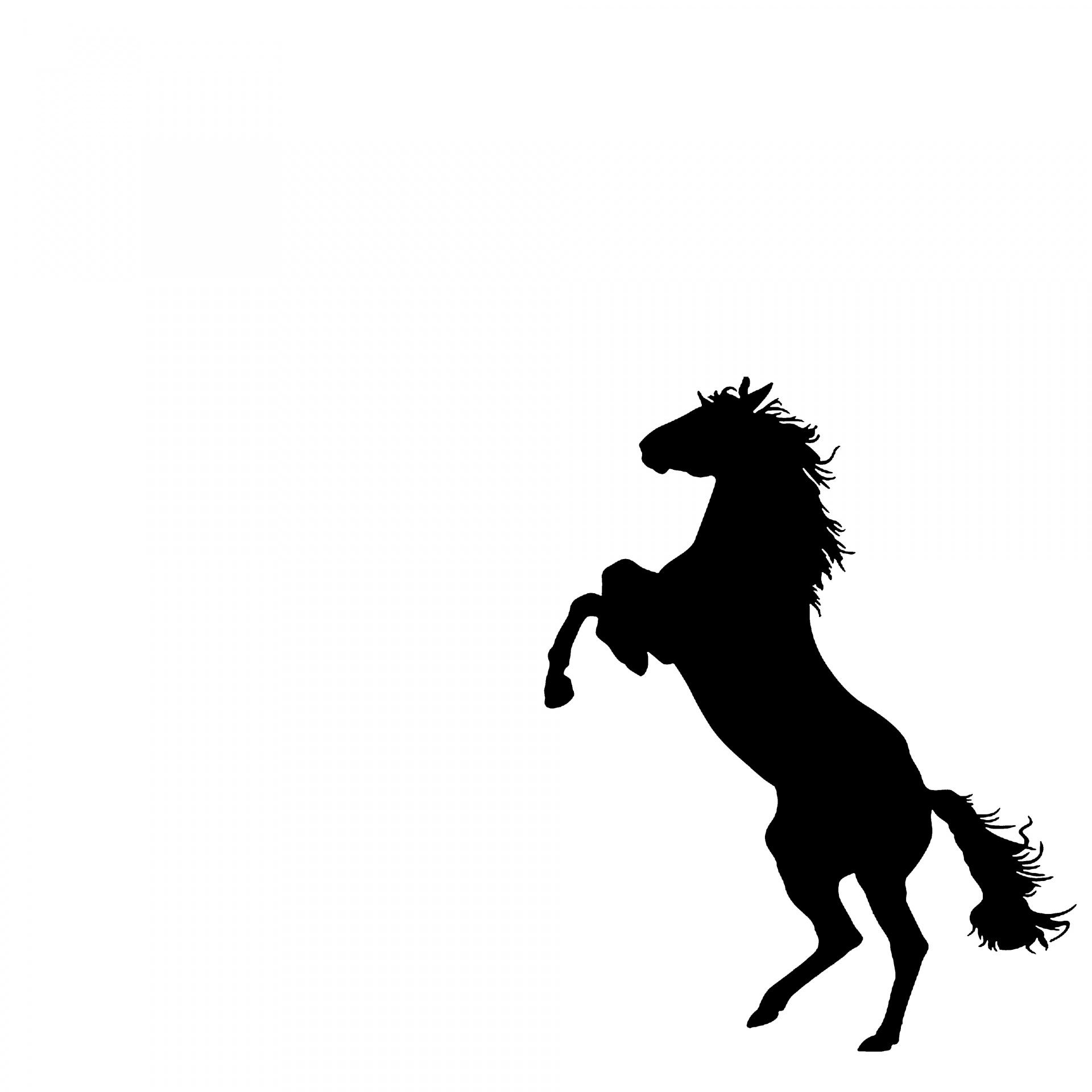 1920x1920 Rearing Horse Free Stock Photo