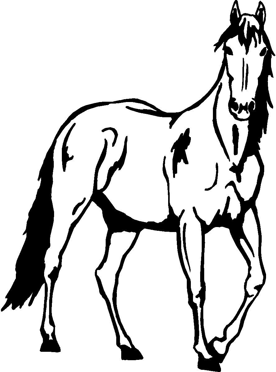 888x1196 Standing Horse Wall Decal Wall Decal Sticker, Clip Art And Wall