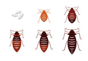 286x200 Bed Bug Free Vector Art