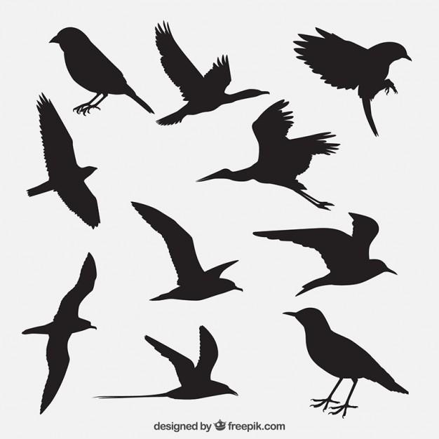626x626 Bird Vectors, Photos And Psd Files Free Download