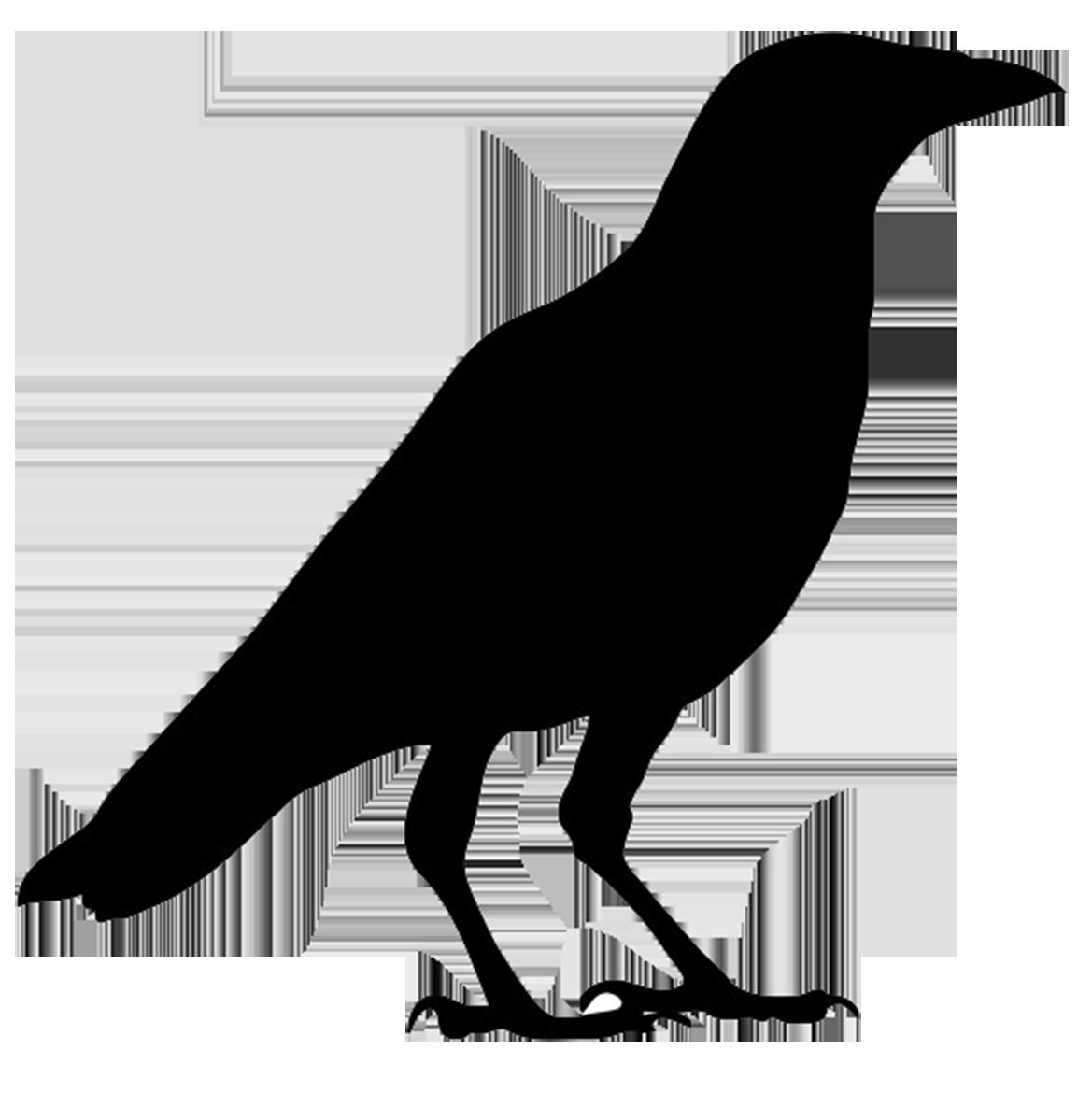 1169x1185 Bird Silhouettes