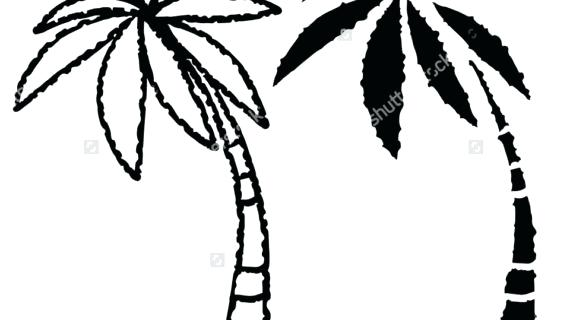 570x320 Drawing A Palm Tree Easy Palm Tree Drawing Palm Trees Drawing