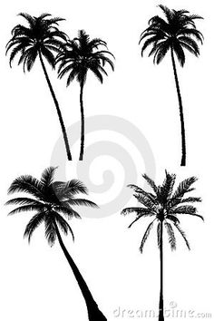 236x354 Eight Highly Detailed Palm Tree Silhouettes. Each Leaf Has Been