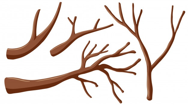 626x350 Tree Vectors, Photos And Psd Files Free Download