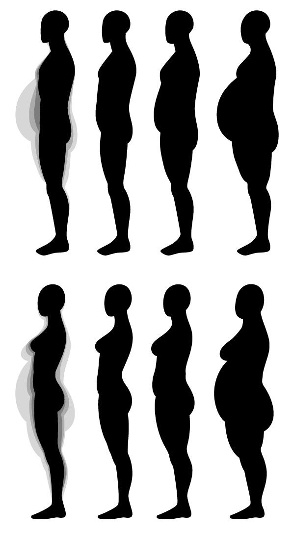 597x1087 Human Anatomy Fundamentals Muscles And Other Body Mass Human