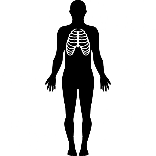 626x626 Human Body Silhouette With Focus On Respiratory System Icons