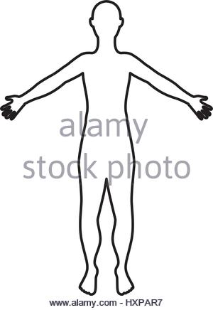 300x436 Man Anatomy Silhouette Isolated Icon Vector Illustration Design