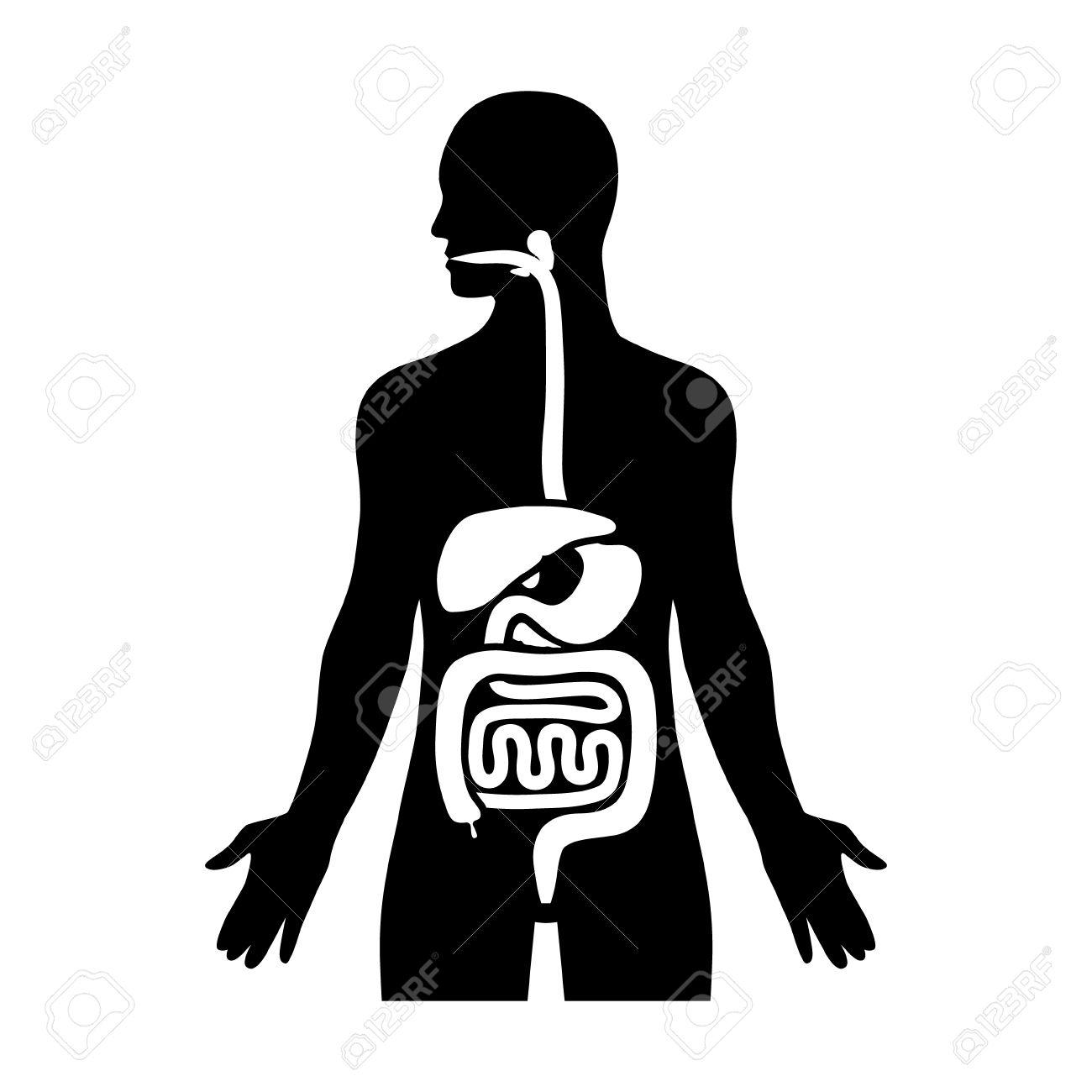1300x1300 Digestive System Diagram Silhouette Human Biological Digestive