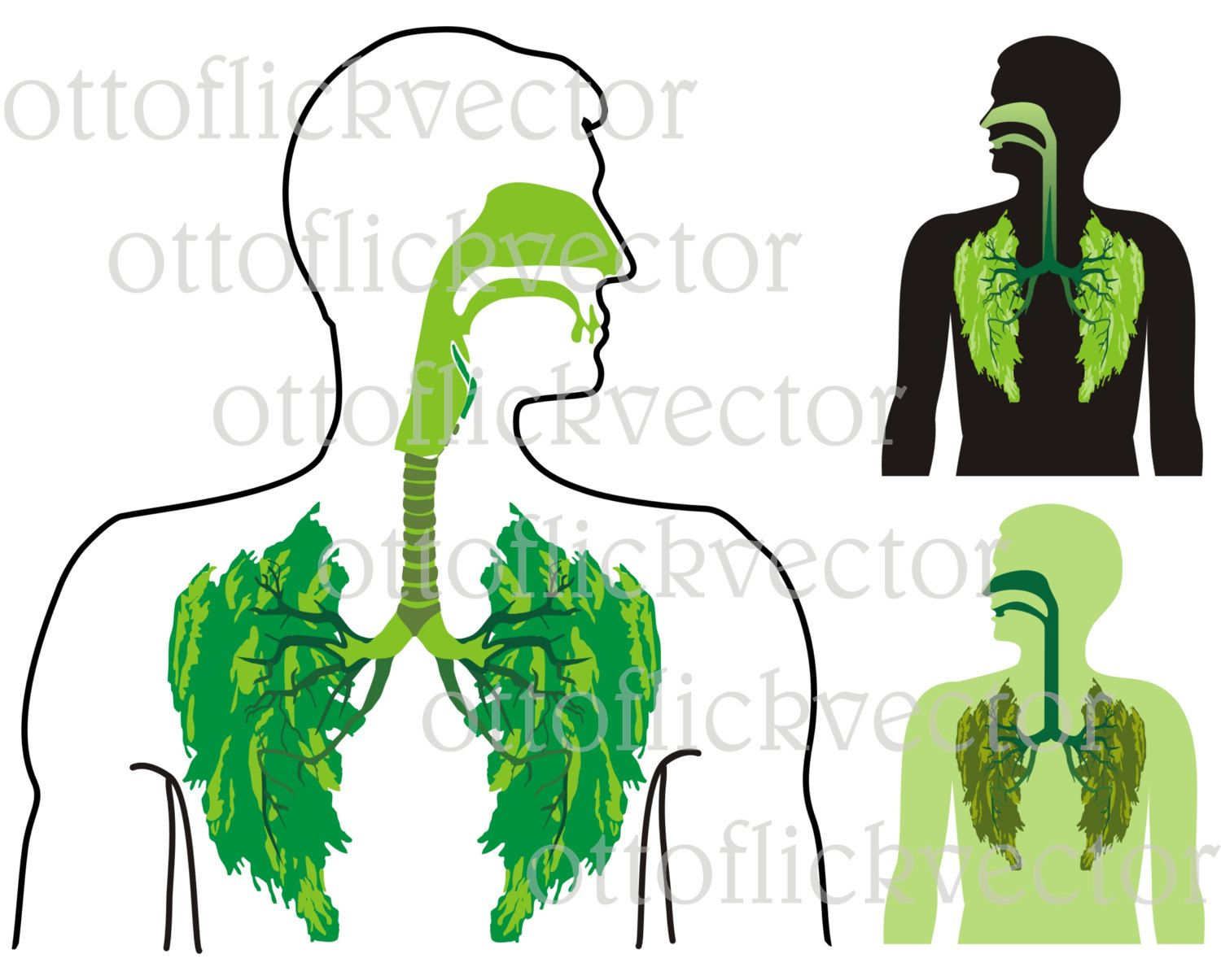 Human Body Silhouette Medical at GetDrawings.com | Free for personal ...