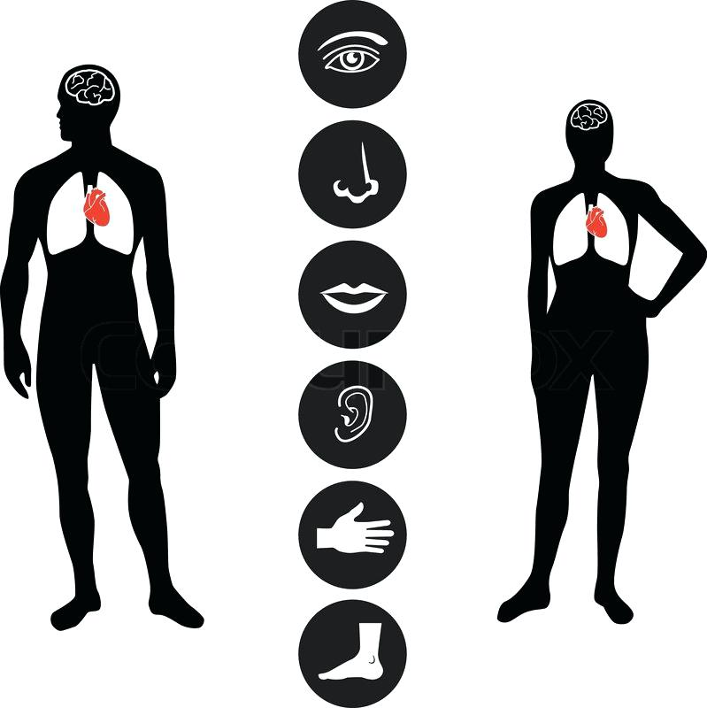 799x800 Human Outline Human Front Side Outline Silhouette Isolated
