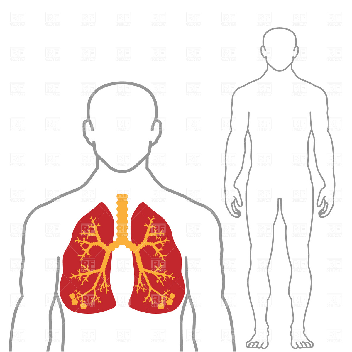 1200x1200 Lungs And Human Body Royalty Free Vector Clip Art Image