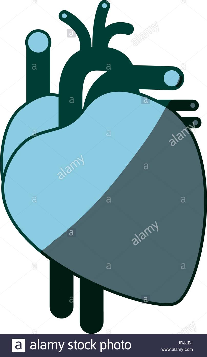 808x1390 Blue Color Shading Silhouette Heart System Human Body Stock Vector