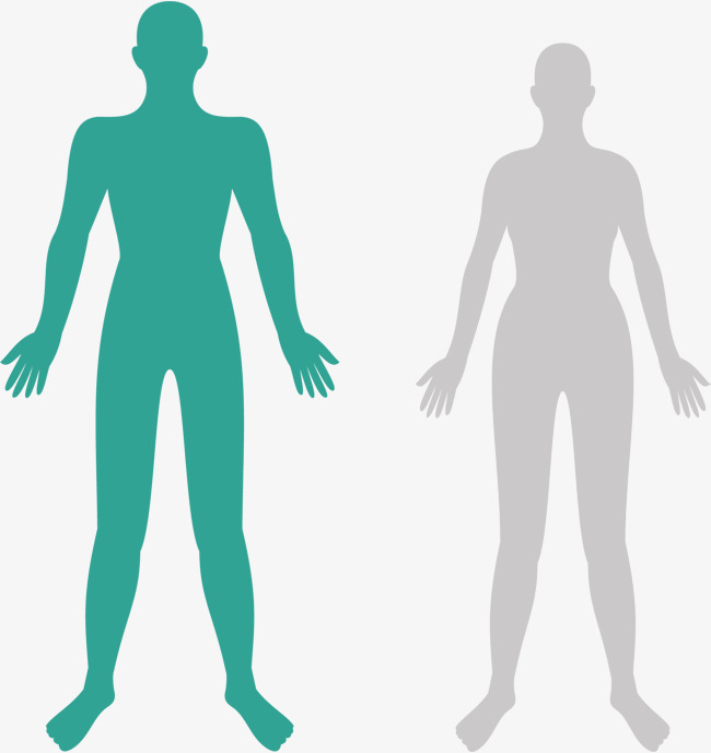 650x689 Body Structure, Human Body, Structure, Biomedical Cosmetic Surgery