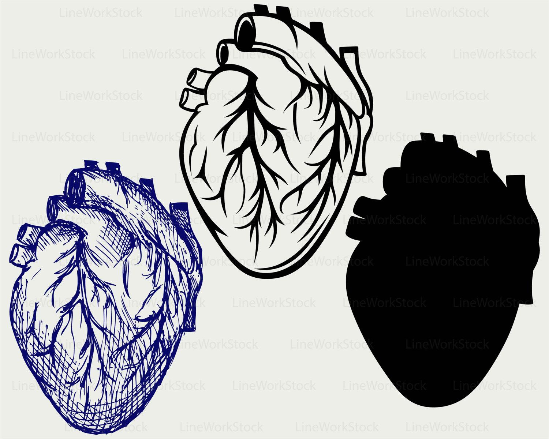 1500x1200 Human Heart Svghuman Heart Cliparthuman Heart Svghuman Heart
