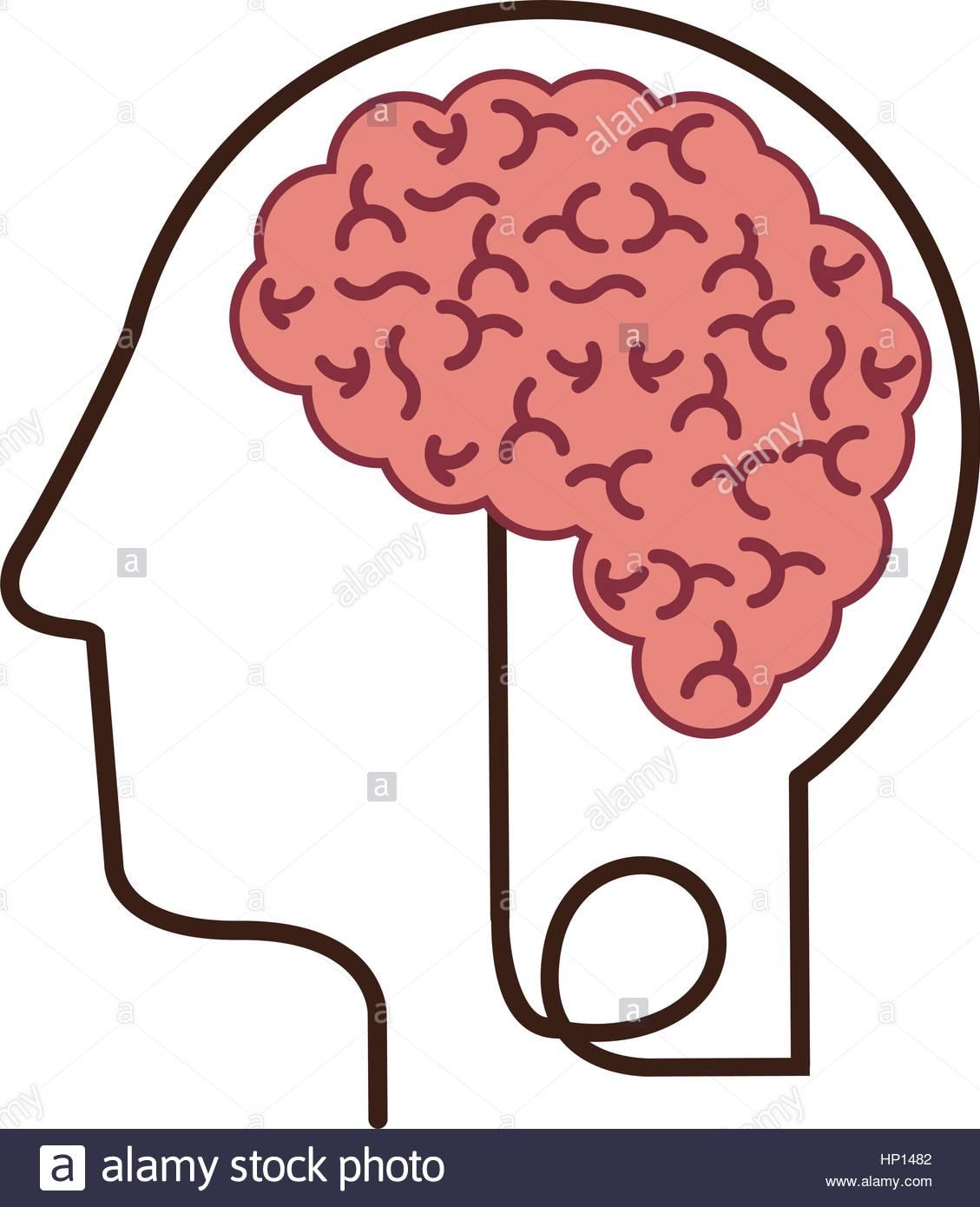 1129x1390 Silhouette Profile Human Head With Brain Vector Illustration Stock