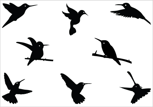 501x352 Hummingbird Clipart Black And White Clipart Image