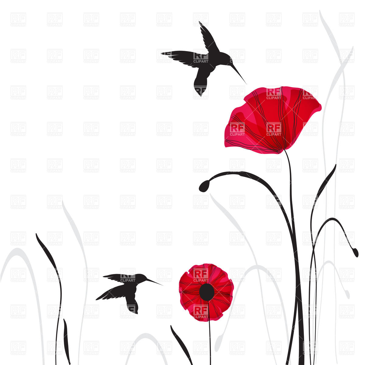1200x1200 Two Poppies And Silhouettes Of Flying Hummingbirds Royalty Free