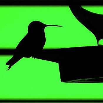 350x350 Tony Porter Photography Artwork Collection Birds
