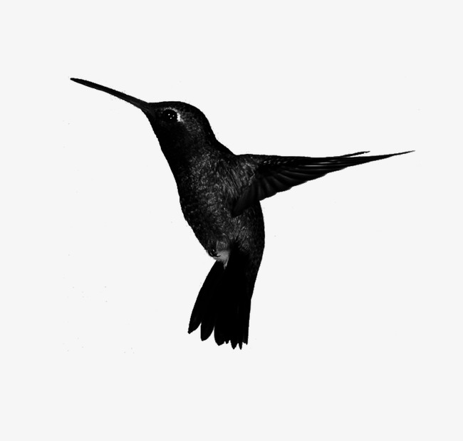 650x619 Animal,hand Painted Black And White,hummingbird, Animal