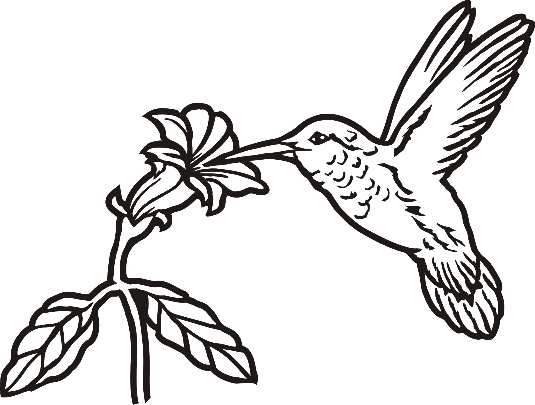 1837x1390 Hummingbird Outline
