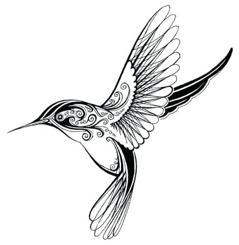 468x480 Hummingbird Outline