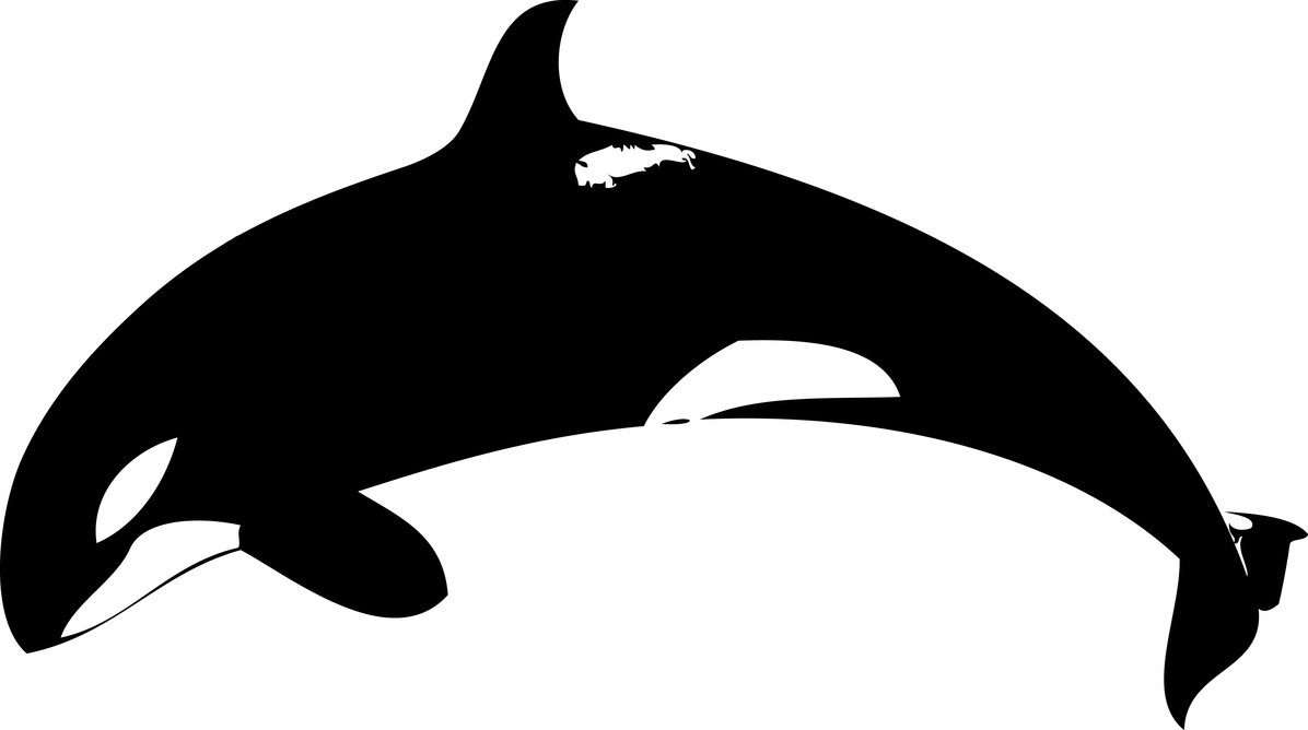 1196x668 List Of Synonyms And Antonyms Of The Word Killer Whale Silhouette