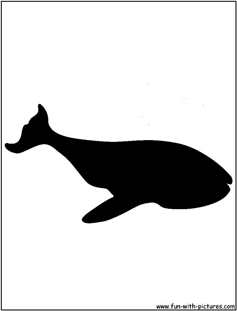 800x1050 Whale Silhouette