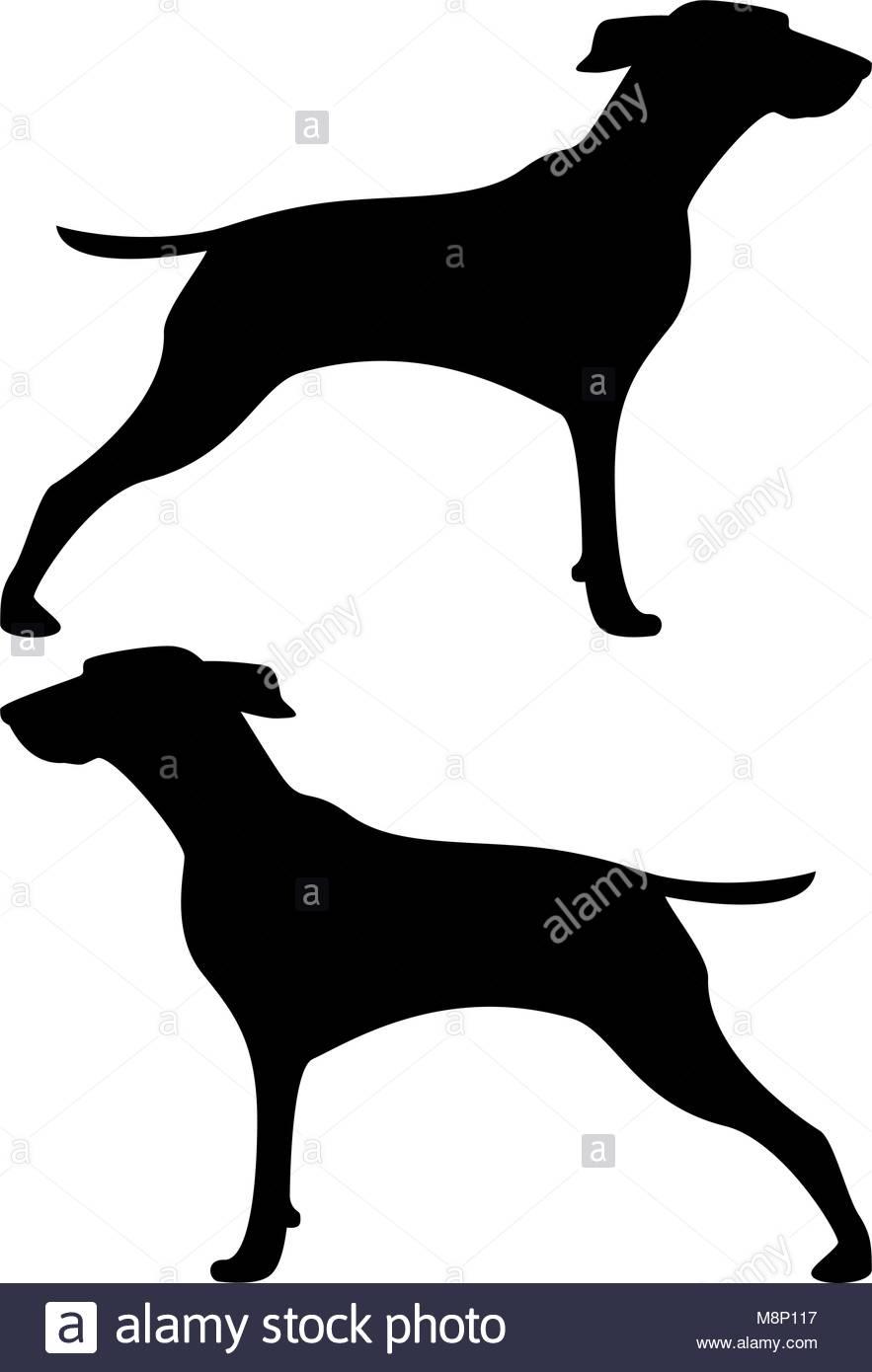 883x1390 Beagle Silhouette Stock Photos Amp Beagle Silhouette Stock Images